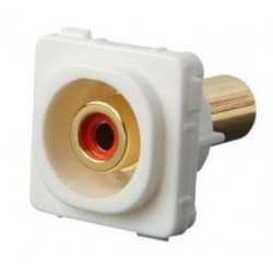 Wall Plate Insert - RCA White (RED version shown)